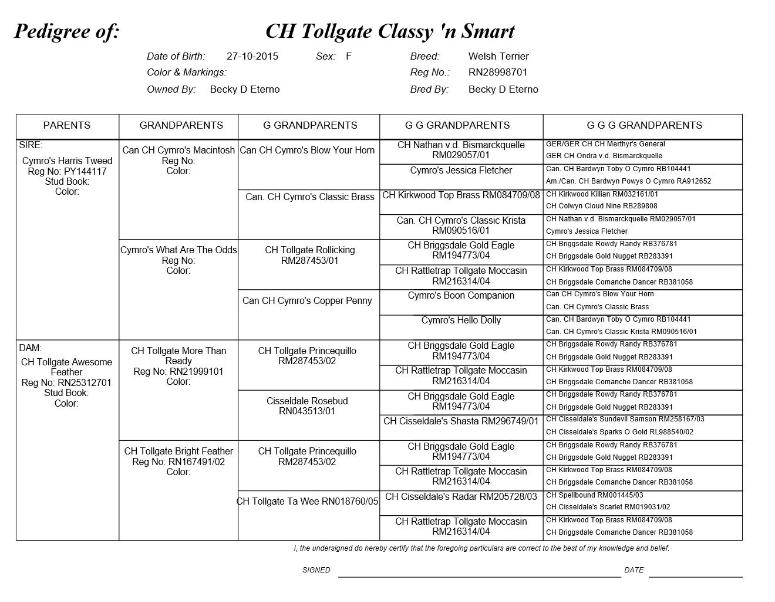 CH Tollgate Classy 'n Smart's Pedigree